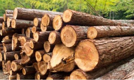 Вакуумный насос для обработки древесины - пропитка